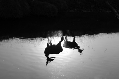 Beverley Brook deer reflection